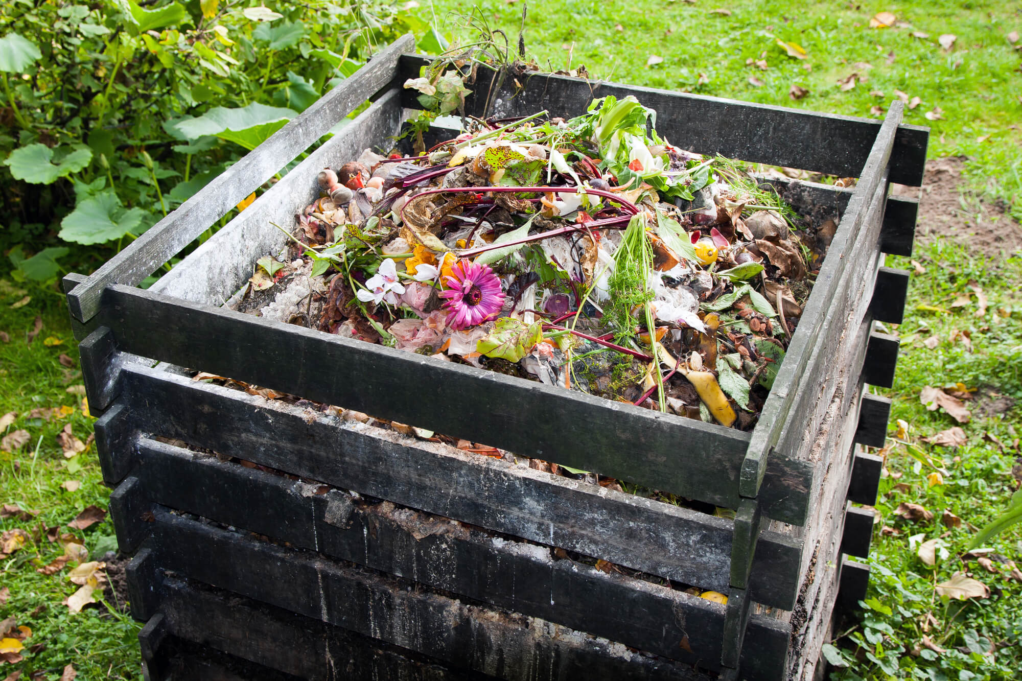 Worm Castings - Forget Composting
