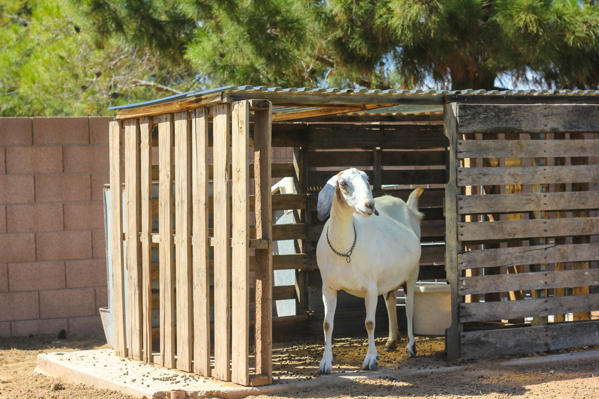 Building a goat pen - Goat House