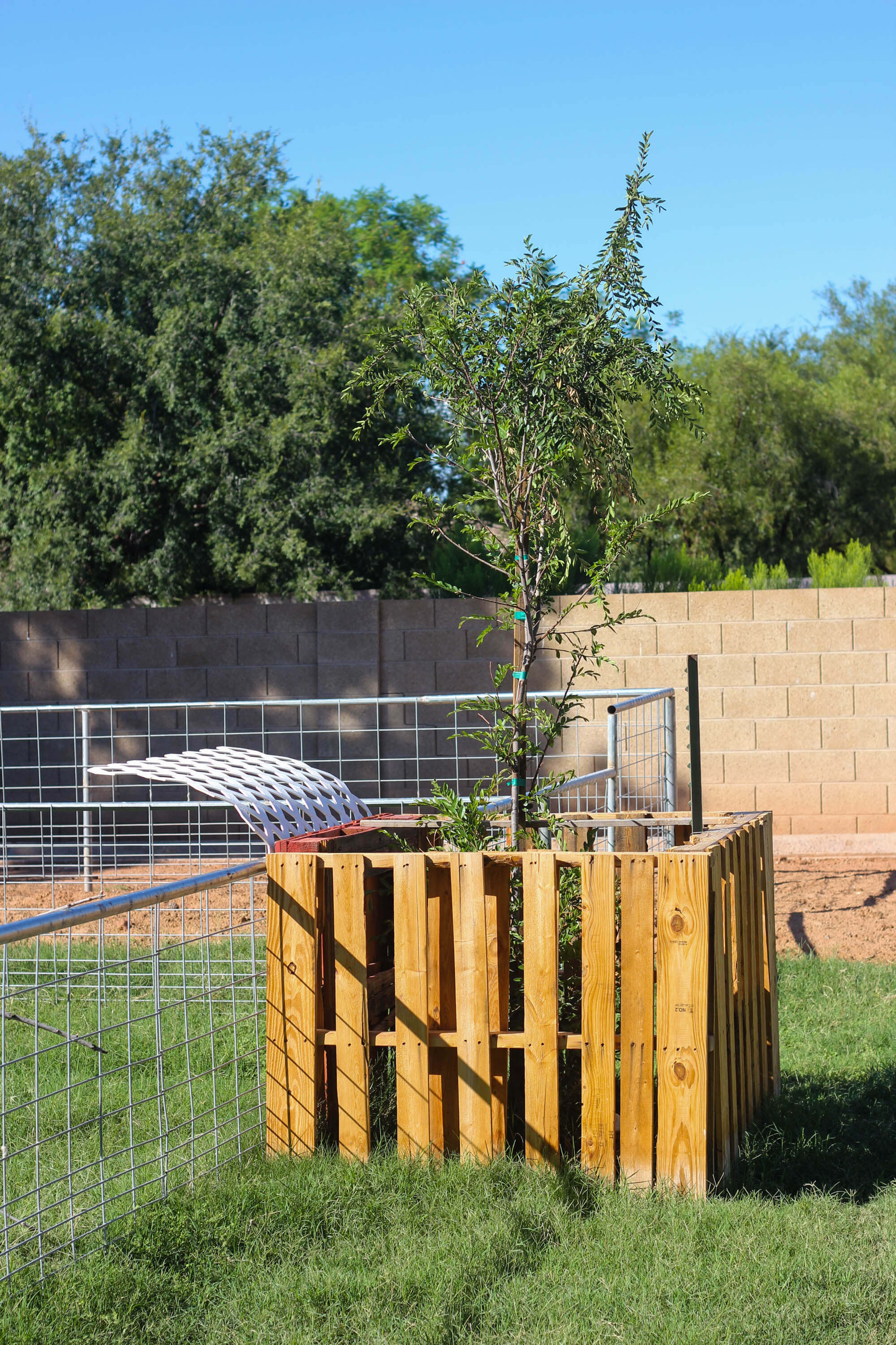 Building a goat pen - Trees for a Shade Source