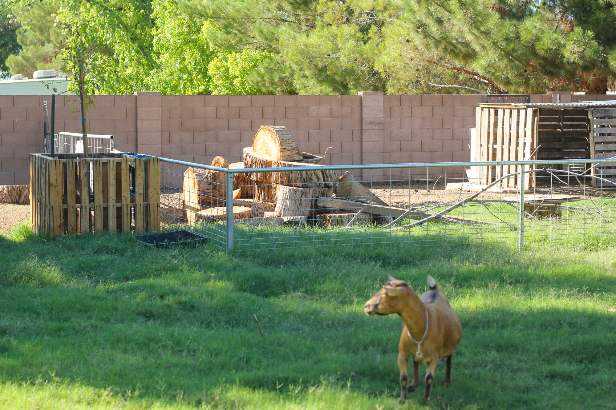 Building a goat pen - Weed 'em and Reap
