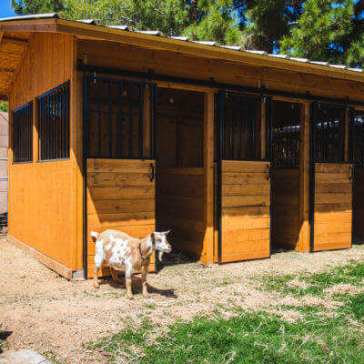 Our Custom Goat Barn!